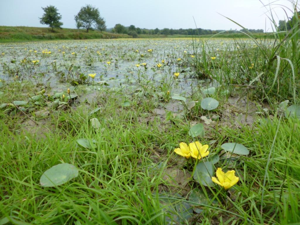 Zone humide de la Corne de Vachon à la confluence entre la Seille et la Saône