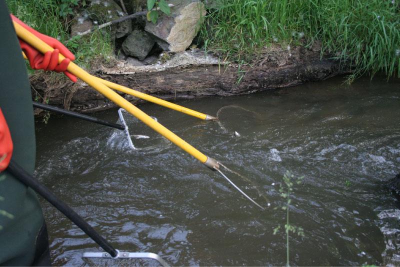 Pêche électrique sur l'Amont de la Grosne