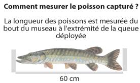 image_taille_reglementaire_poisson
