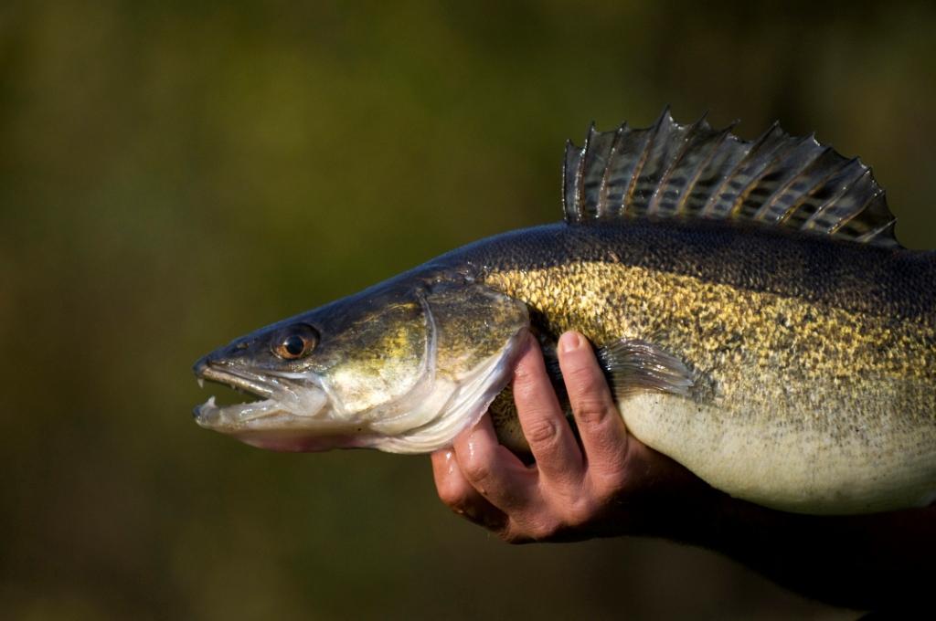 La pêche et la chasse dans le domaine de Gomel