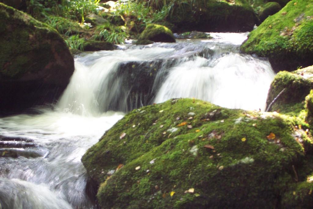 Le Morvan abrite encore des rivières préservées. Les gorges de la Canche