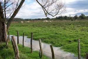 Prairie de la Brenne à Montjay