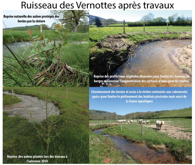 Ruisseau des Vernottes - 6 mois après les travaux (1er printemps)