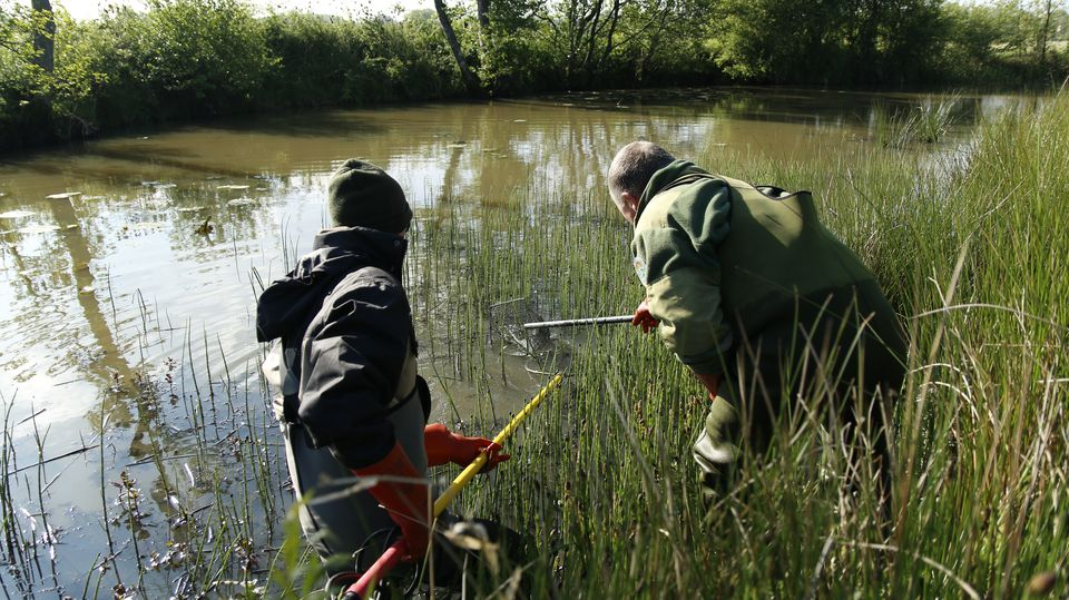 Pêche électrique pour échantillonnage piscicole.